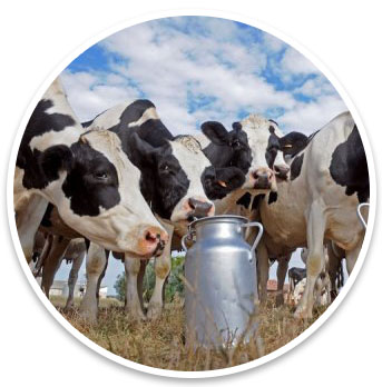 India-Dairy-Foods-and-Farm-Market
