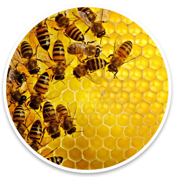 HoneycombYellow